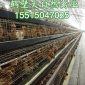 普洱60日�g(天)��� 大午金�P青年�u�B殖,昭通105日�g(天)海�m褐青年蛋�u��B管理,土�u蛋品�N